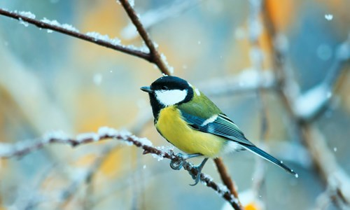 Get Birdwatch Ready with RSPB