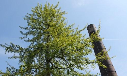 Ag ainmeachadh na Craoibhe / Naming the Tree
