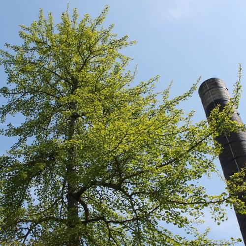 Naming the Tree/ Naming the Tree/ Ag Ainmeachadh na Craoibhe