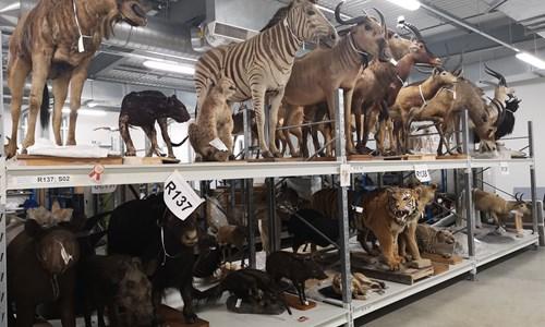 Themed Tour : Amazing Animals