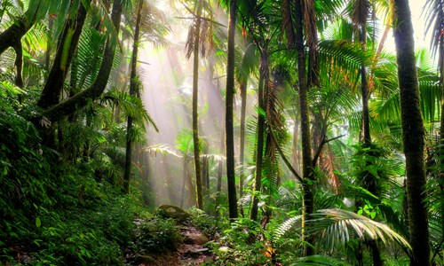 Rescuing Rainforest with RSPB
