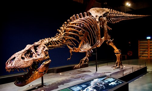 T. rex in Town - Exhibition
