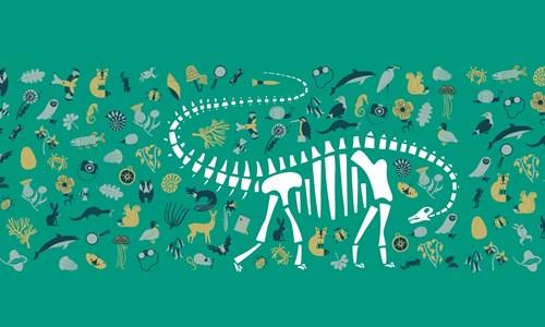 Fossil Handling box